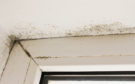 Is Black Mold Hiding In Your Home?