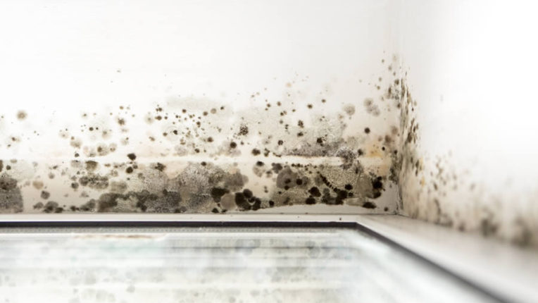 Common Causes for Mold Growth in Ann Arbor Michigan